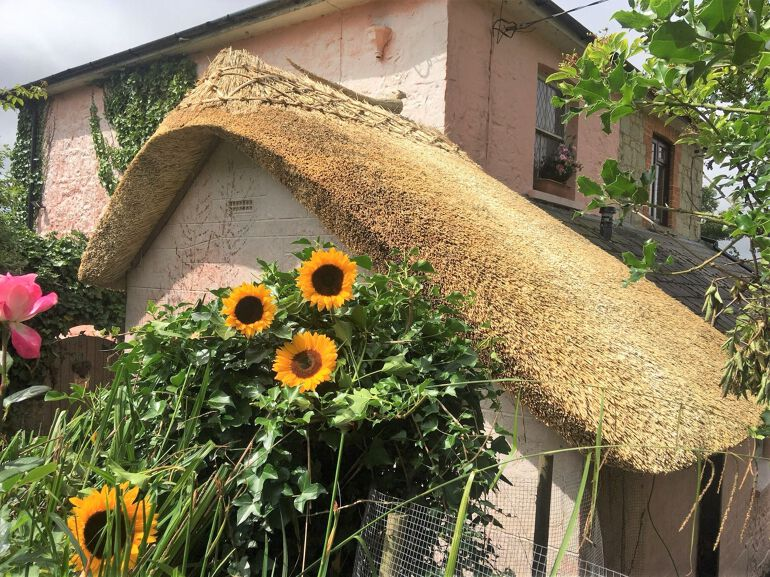 Honeymoon cottage thatch