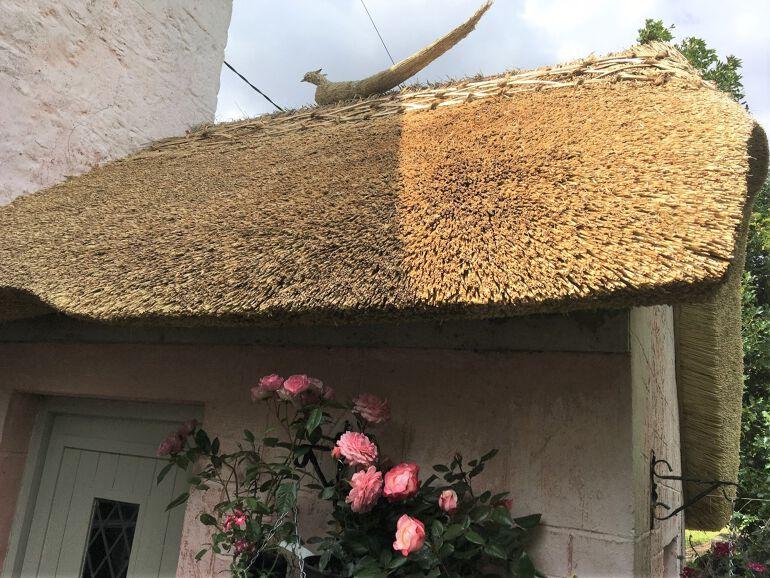 honeymoon cottage pthatch
